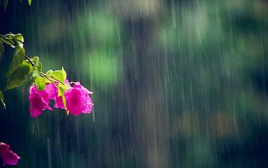 stt vui về mưa